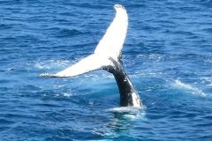 whale-1149826_640