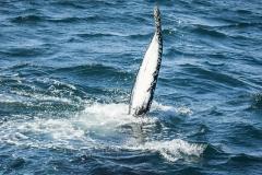 whale-1585046_640