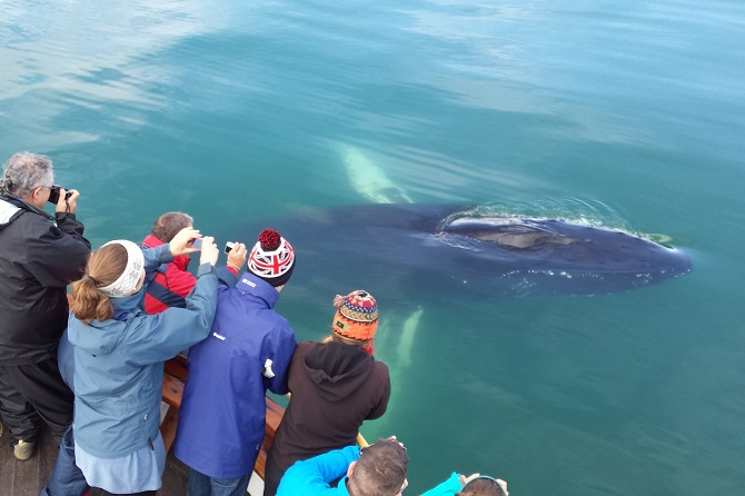 We saw many whales on each tour in 2015 and sometimes they are watching us too!
