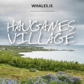 Hauganes village Whale watching Hauganes