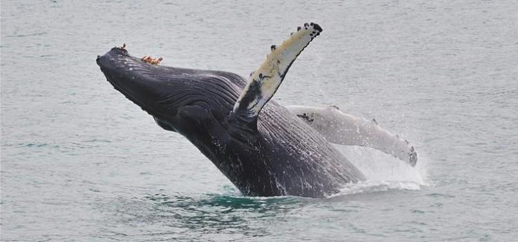 Humpback Whale Names