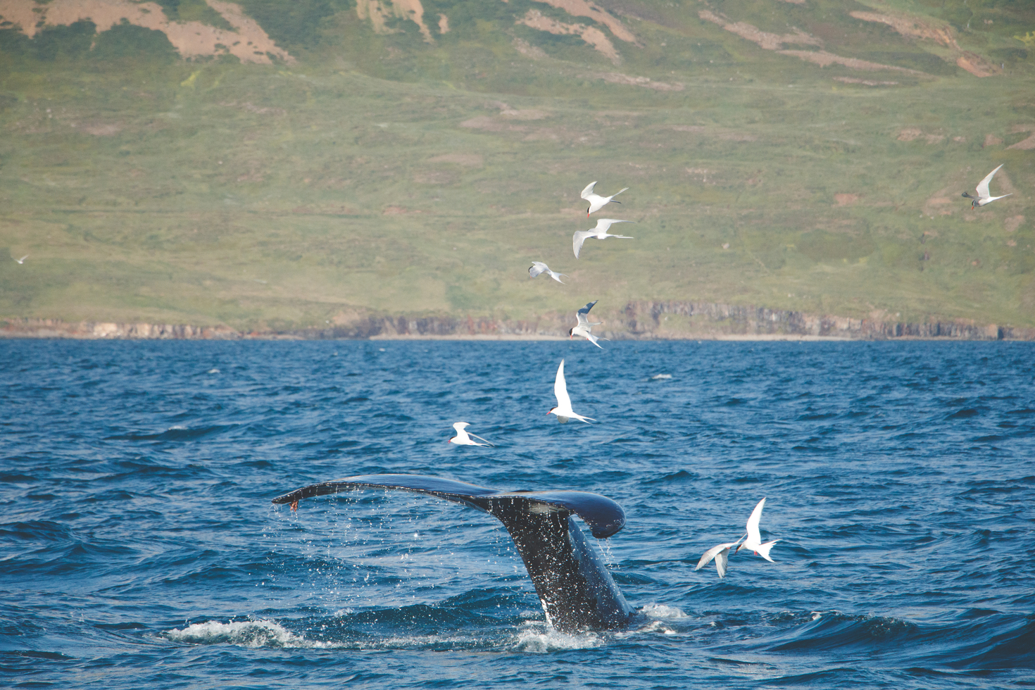 Photographing whales tips