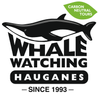 Whale Watching Iceland Tours