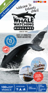 Whale watching iceland brochure information tour guide