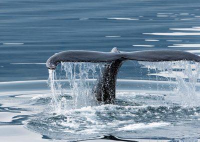 whales-whaletail